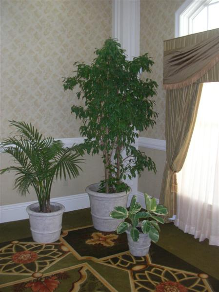 Typical Plant Grouping