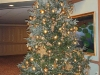14\'tall Focal Tree Frazer in Gold Decorations