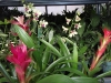 Bromeliads and Dendrobium Orchids