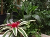 Spark of Color White Peace Lilky and Guzmania Stripe