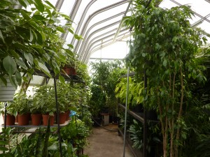 Designs Unlimited Greenhouse - interior